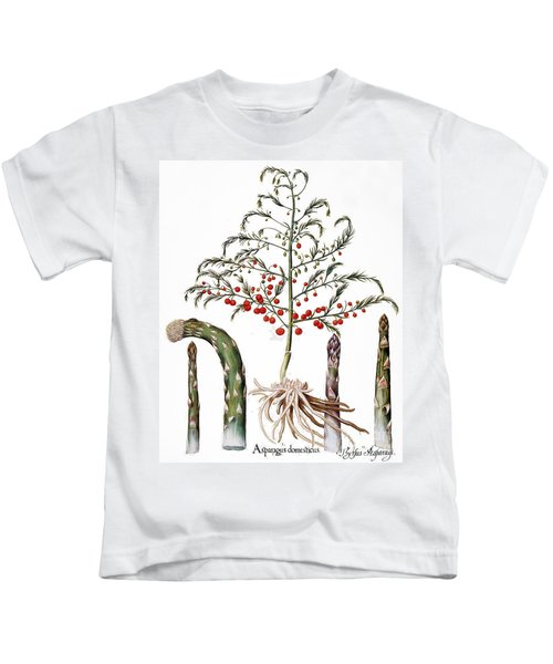 Botany: Asparagus, 1613 Kids T-Shirt by Granger