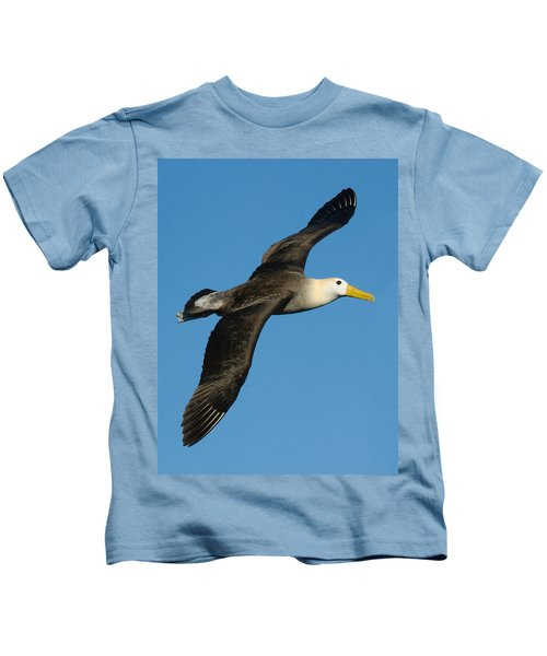 Waved Albatross Diomedea Irrorata Kids T-Shirt by Panoramic Images