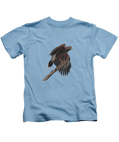Harris Hawk - Transparent Kids T-Shirt by Nikolyn McDonald