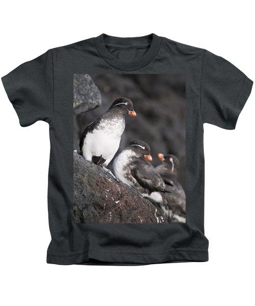 Group Of Parakeet Auklets, St. Paul Kids T-Shirt by John Gibbens