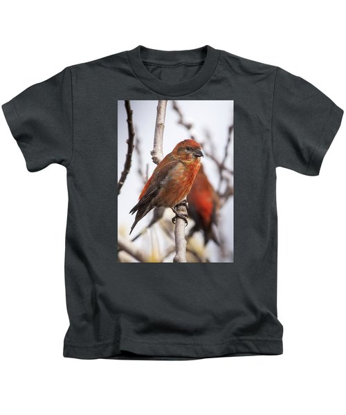 Male Red Crossbills Kids T-Shirt by Robert Potts