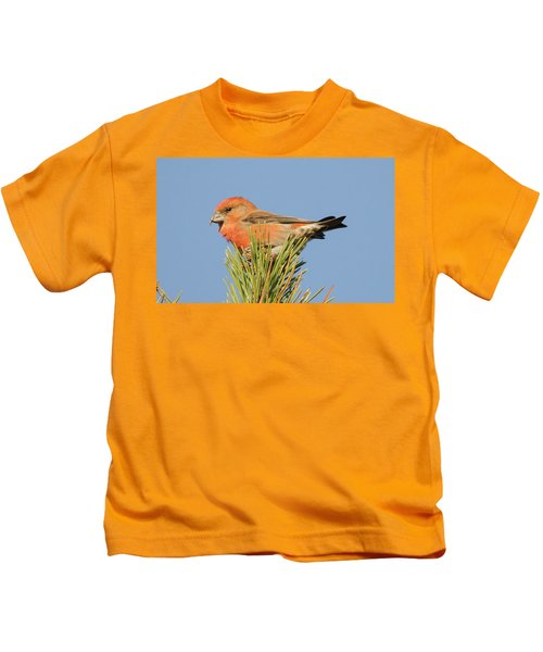Crossbill Kids T-Shirt by Judd Nathan