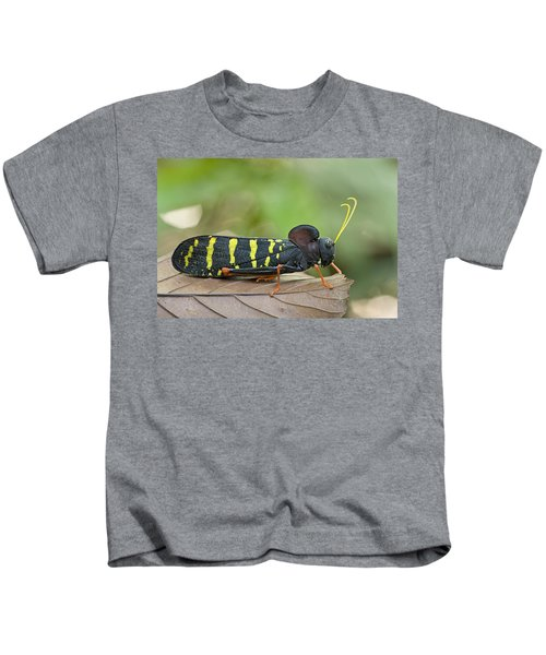 Lubber Grasshopper Guyana Kids T-Shirt by Piotr Naskrecki