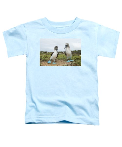 Blue-footed Booby Pair Courting Toddler T-Shirt by Tui De Roy