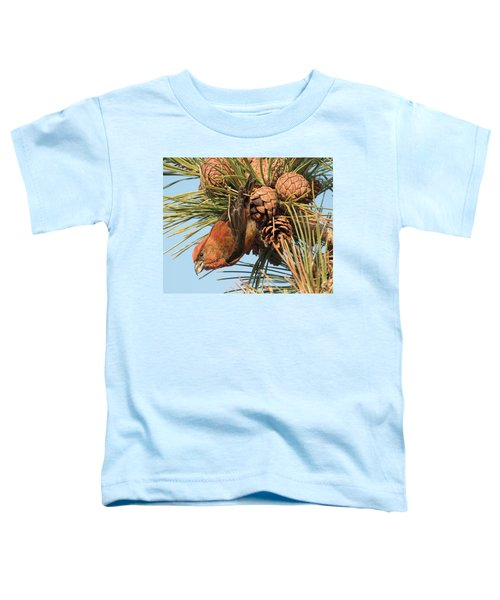 Crossbill Toddler T-Shirt by Judd Nathan