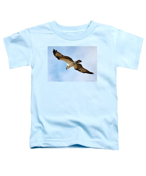 Hunter Osprey Toddler T-Shirt by Carol Groenen