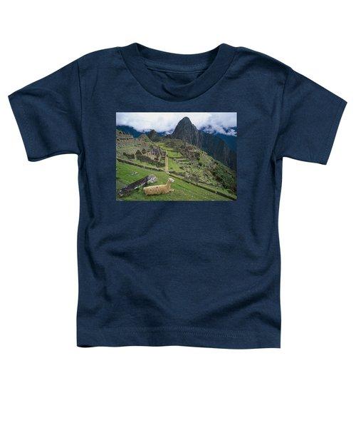 Llama At Machu Picchus Ancient Ruins Toddler T-Shirt by Chris Caldicott