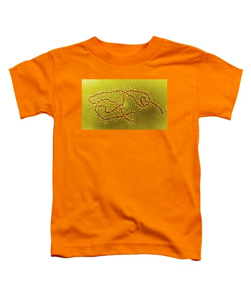 Lampbrush Chromosomes Newt, Lm Toddler T-Shirt by Science Source