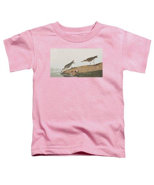 Semipalmated Sandpiper Toddler T-Shirt by John James Audubon