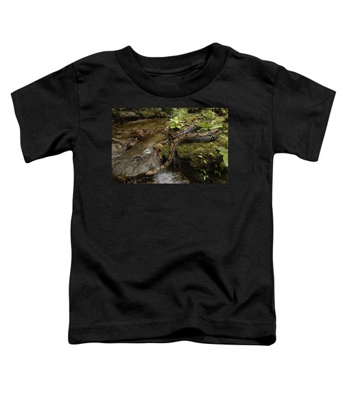 Boa Constrictor Crossing Stream Toddler T-Shirt by Pete Oxford