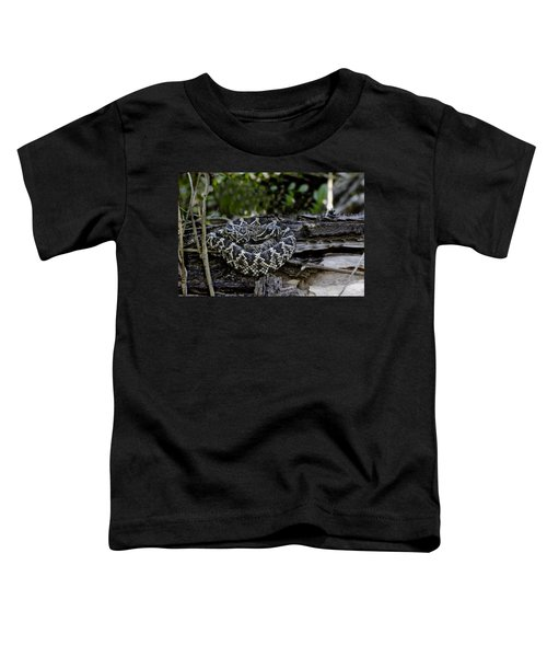 Eastern Diamondback-2 Toddler T-Shirt by Rudy Umans
