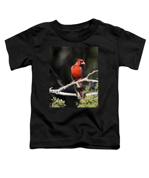 Male Northern Cardinal Toddler T-Shirt by Gary Langley
