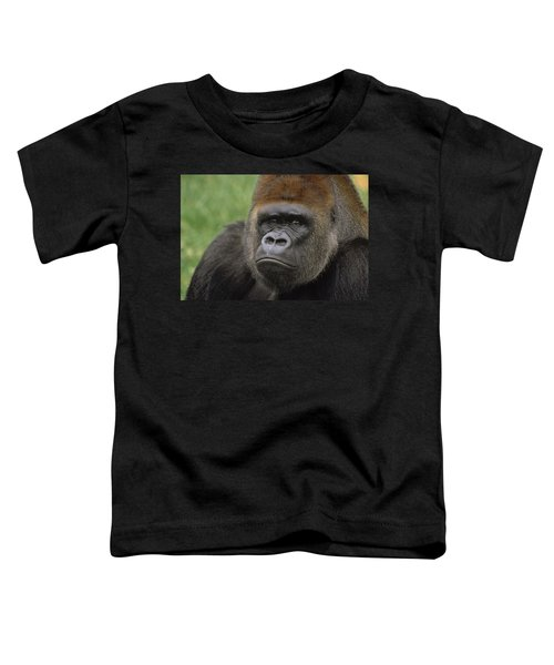 Western Lowland Gorilla Silverback Toddler T-Shirt by Gerry Ellis