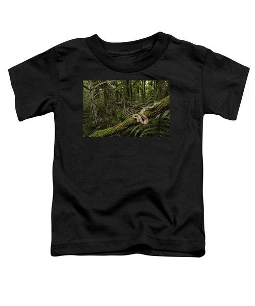 Boa Constrictor Boa Constrictor Coiled Toddler T-Shirt by Pete Oxford