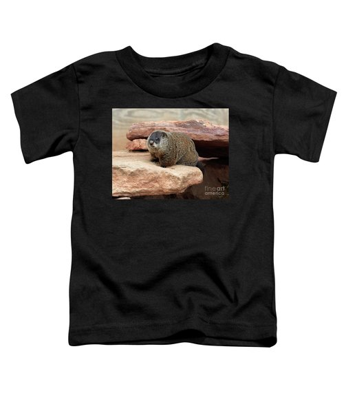 Groundhog Toddler T-Shirt by Louise Heusinkveld