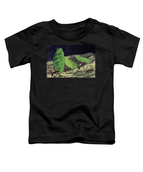 Leafcutter Ant Atta Cephalotes Workers Toddler T-Shirt by Mark Moffett