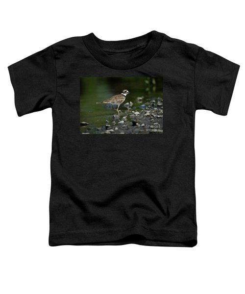 Killdeer  Toddler T-Shirt by Douglas Stucky