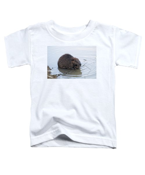 Beaver Chewing On Twig Toddler T-Shirt by Chris Flees