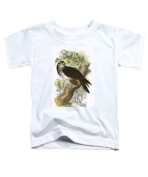 Common Buzzard Toddler T-Shirt by English School