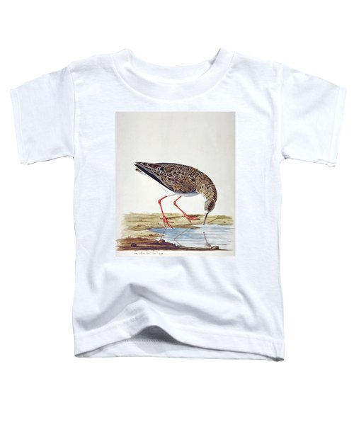Curlew Sandpiper Toddler T-Shirt by Charles Collins