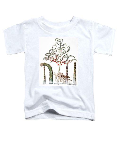 Botany: Asparagus, 1613 Toddler T-Shirt by Granger