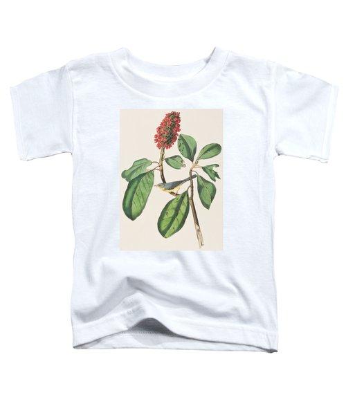 Bonaparte's Flycatcher Toddler T-Shirt by John James Audubon