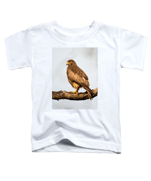 White-eyed Buzzard Butastur Teesa Toddler T-Shirt by Panoramic Images