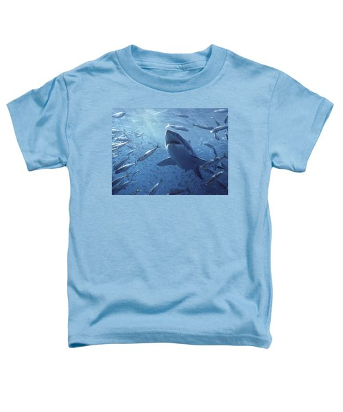 Great White Shark Carcharodon Toddler T-Shirt by Mike Parry