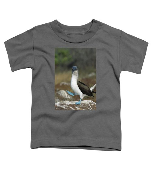Blue-footed Booby Courtship Dance Toddler T-Shirt by Tui De Roy