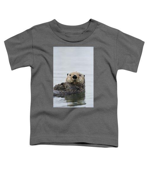 Sea Otter Alaska Toddler T-Shirt by Michael Quinton