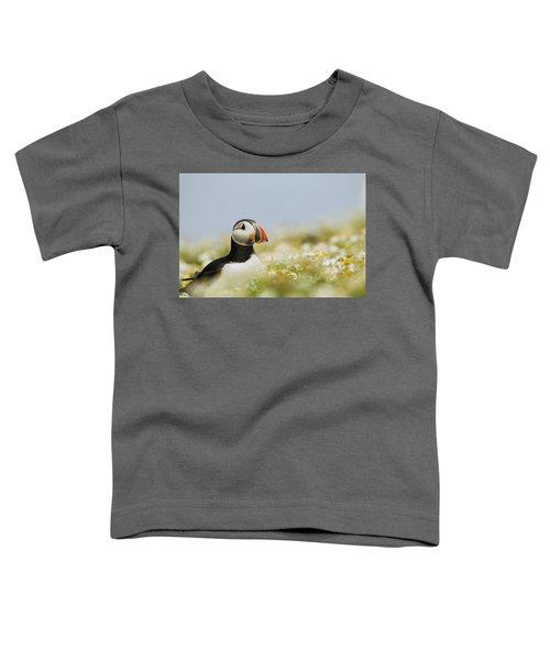 Atlantic Puffin In Breeding Plumage Toddler T-Shirt by Sebastian Kennerknecht