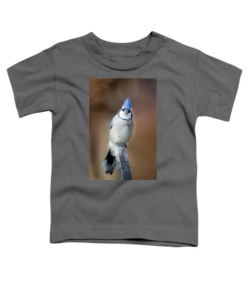 Backyard Birds Blue Jay Toddler T-Shirt by Bill Wakeley