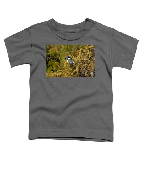 Belted Kingfisher Female Toddler T-Shirt by Anthony Mercieca