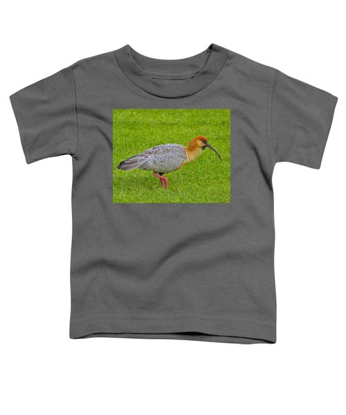 Black-faced Ibis Toddler T-Shirt by Tony Beck