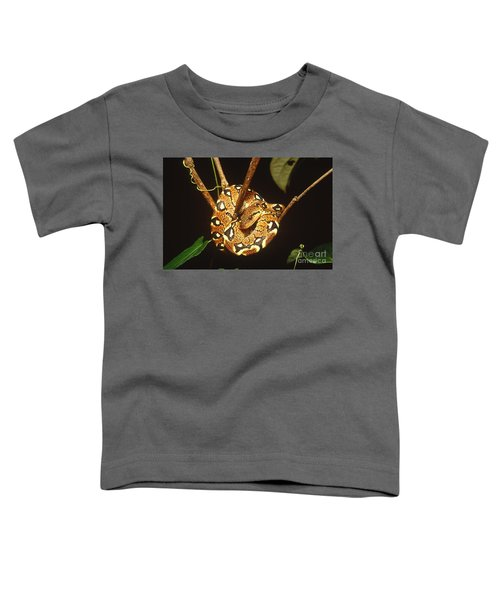Boa Constrictor Toddler T-Shirt by Art Wolfe