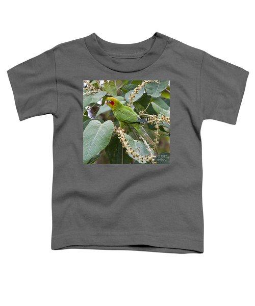 Chiriqui Conure 2 Toddler T-Shirt by Heiko Koehrer-Wagner