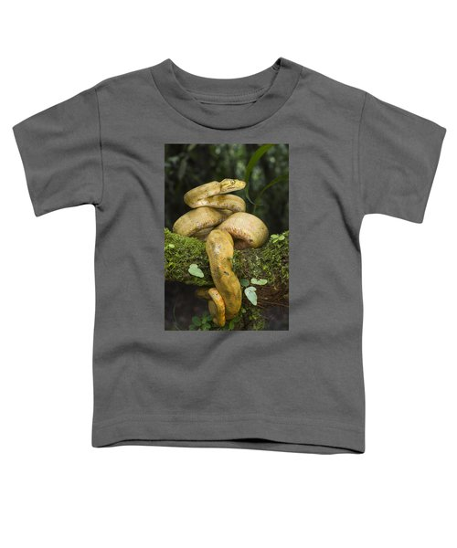 Common Tree Boa -yellow Morph Toddler T-Shirt by Pete Oxford