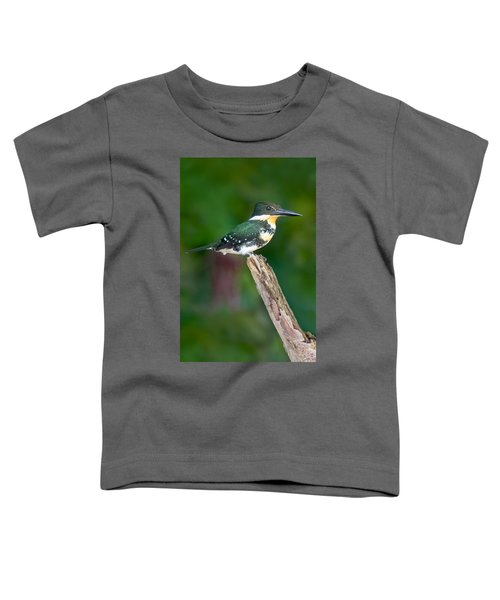 Green Kingfisher Chloroceryle Toddler T-Shirt by Panoramic Images