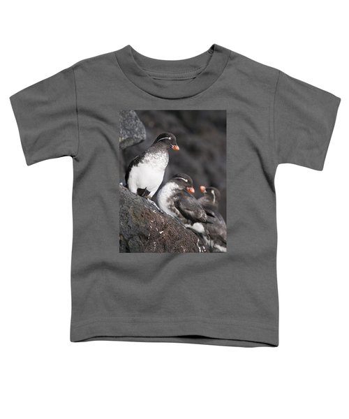 Group Of Parakeet Auklets, St. Paul Toddler T-Shirt by John Gibbens