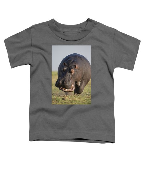 Hippopotamus Bull Charging Botswana Toddler T-Shirt by Vincent Grafhorst
