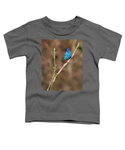 Indigo Bunting Portrait Toddler T-Shirt by Bill Wakeley