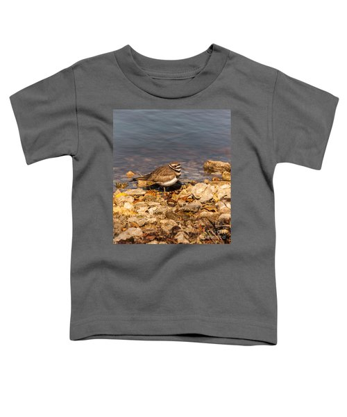 Kildeer On The Rocks Toddler T-Shirt by Robert Frederick