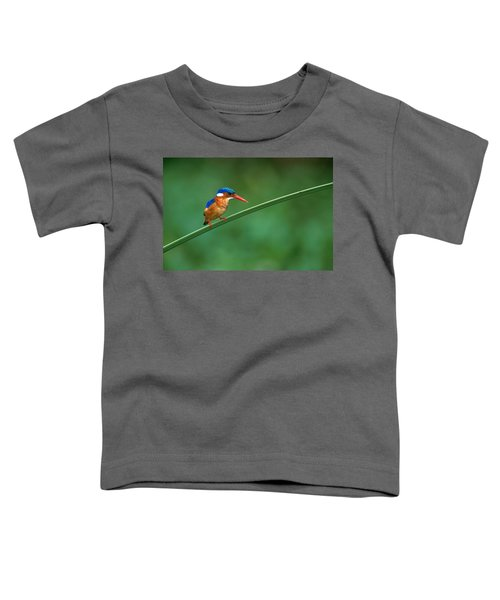 Malachite Kingfisher Tanzania Africa Toddler T-Shirt by Panoramic Images