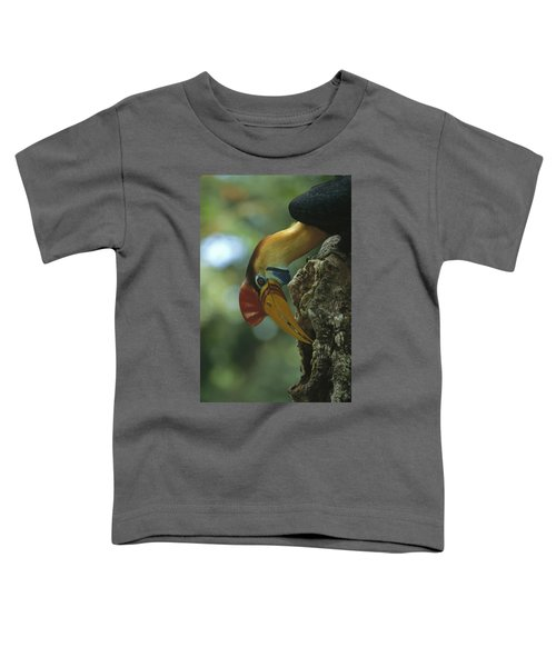 Sulawesi Red-knobbed Hornbill Male Toddler T-Shirt by Tui De Roy