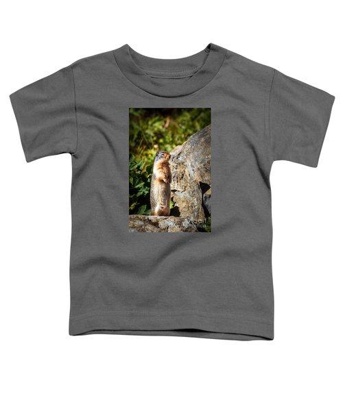 The Marmot Toddler T-Shirt by Robert Bales