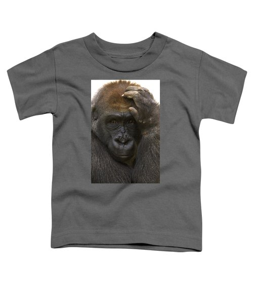 Western Lowland Gorilla With Hand Toddler T-Shirt by San Diego Zoo