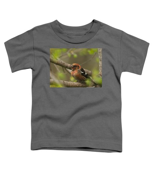 White-winged Crossbill Toddler T-Shirt by James Peterson