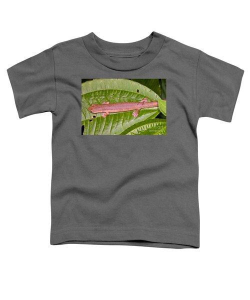 Bolitoglossine Salamander Toddler T-Shirt by Dante Fenolio