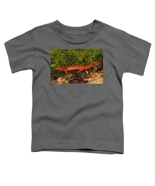 Red Salamander Pseudotriton Ruber Toddler T-Shirt by Pete Oxford