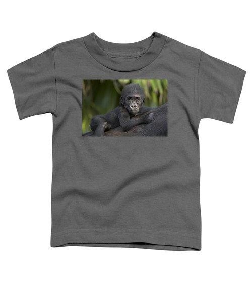 Western Lowland Gorilla Gorilla Gorilla Toddler T-Shirt by San Diego Zoo
